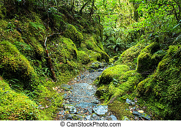 Rain Forest scenary. Track in New Zealand