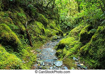 Bush Green Rain Forest New Zealand