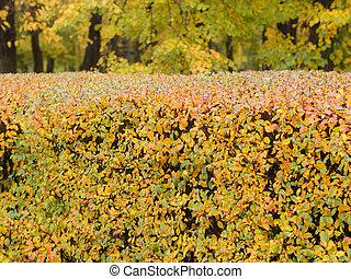 bush in an autumn park
