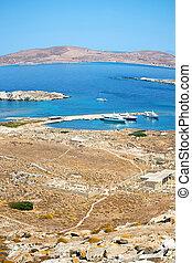 bush in delos greece the historycal acropolis and old ruin site