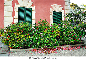 bush in front of facade with window and shutters in Italy