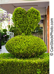 bush in the form of heart