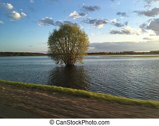 Bush in the lake, travel to rural area