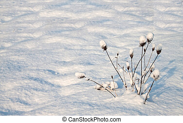 Bush in the snow