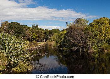 bush, lago, nativo
