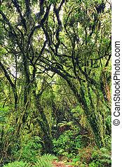 bush, nativo