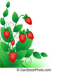 Bush of a ripe red strawberry on a white background