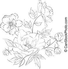 Bush of beautiful peonies. - Bush of beautiful peonies, ink ...