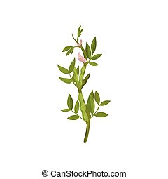 Bush of flowering lentils with green pods and leaves. Agricultural crop. Leguminous plant. Flat vector icon