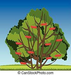 Bush of ripe rowanberry on year glade - Vector illustration...