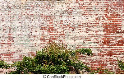 Bush on Old Painted Brick Wall