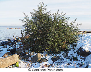 bush on the lake in winter