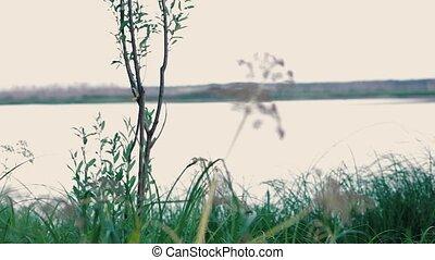 Bush on the river bank