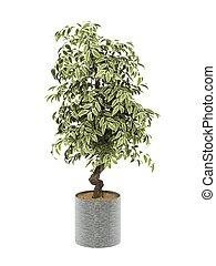 bush plant