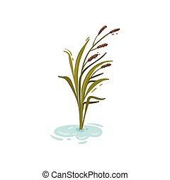 Bush reeds in the water. Vector illustration on white background.