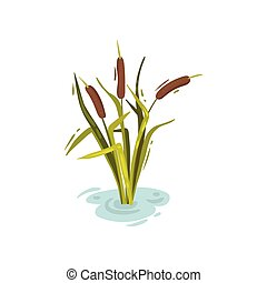 Bush reeds with brown tops. Vector illustration on white background.