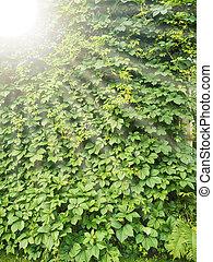 bush texture and sunbeams