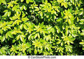 Bush texture