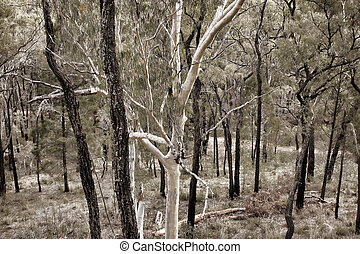 bush trees Australia