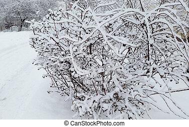 bush under snow in winter