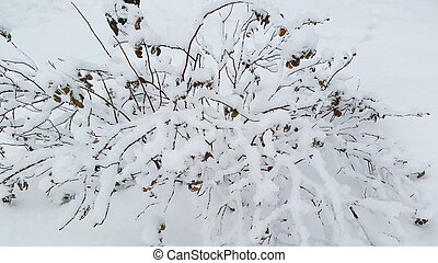 bush under snow - wintertime in Ukraine