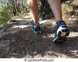 Bush walking - Man bush walking at Tomaree National Park (...