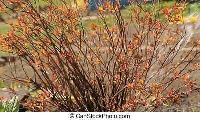 bush watering in a garden