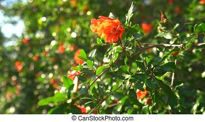 Bush with bright orange flowers in bloom on Cyprus