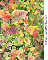 Bush with colorful autumn leaves on green grass