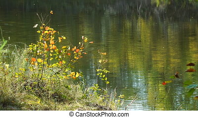 Bush with colorful leaves on the banks of a river or lake