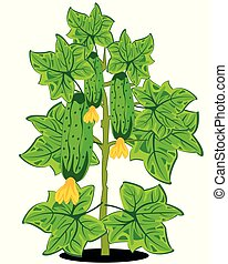 Bush with cucumber on white background is insulated
