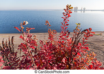 Bush with red autumn leaves growing on the reservoir coast