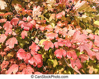 Bush with red autumn leaves
