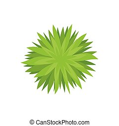 Bush with sharp leaves. View from above. Vector illustration on white background.