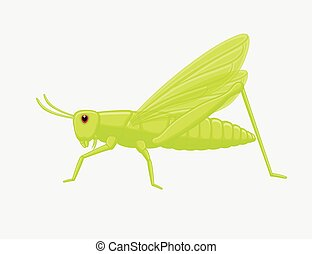 Bushcricket Insect Cartoon Vector Illustration
