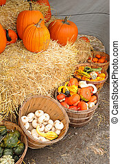 Bushel baskets of gourds and squash - Baskets of gourds...