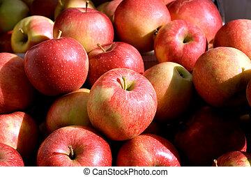 A bushel of freshly picked red apples.