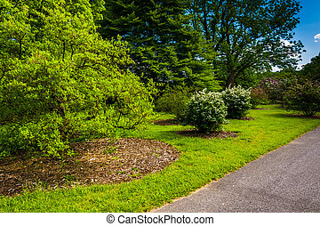 Bushes and trees along a path at Cylburn Arboretum, Baltimore, M
