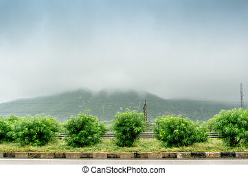 bushes in front of fog covered hills