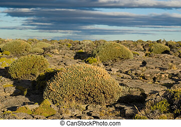 patagonian steppe,