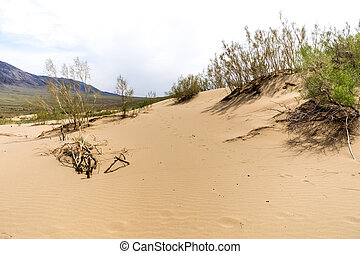 bushes in the sand desert wih mountains at background