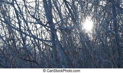 sunlight - bushes, wind, sunlight