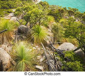 bushland, wilsons, promontorio