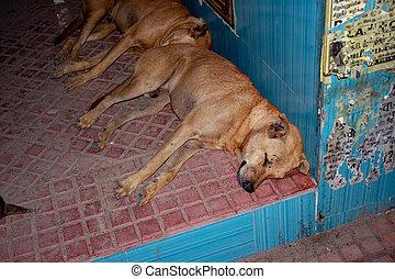 bushokje, straat, tamilnadu, dog, binnen, india., chennai, ...