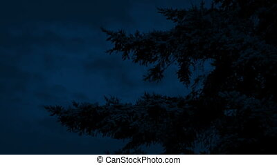 Bushy Tree Branches In Gentle Breeze At Night