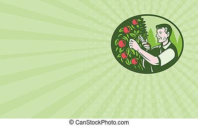 Business card Horticulturist Farmer Pruning Fruit - Business...