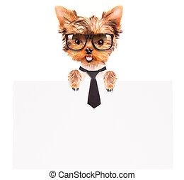 business dog holding banner - business dog holding empty...