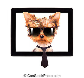 business dog on a digital tablet screen