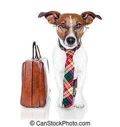 business dog with a leather bag