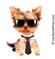 business dog with tie and glasses